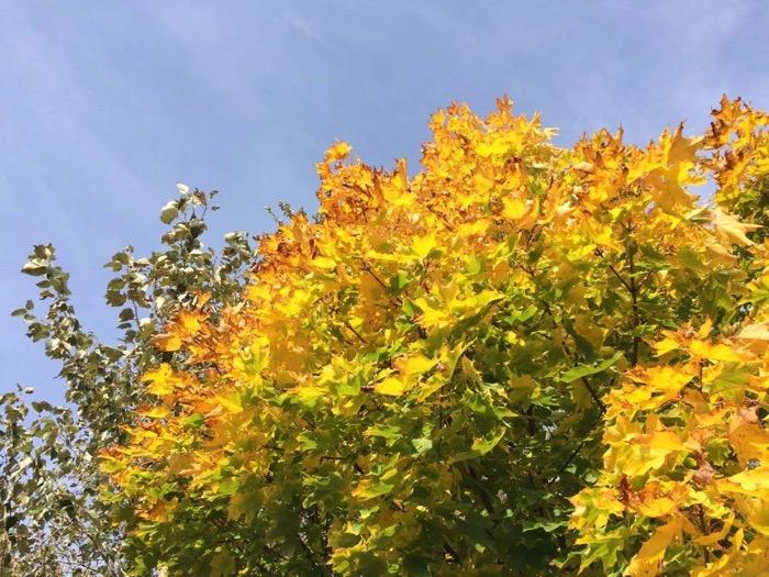 Herbst - Wunderbare Farbenpracht - Klinkens Malerbetrieb